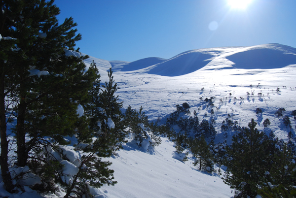 The Cairngorms ECN site, which is part of the INTERACT network of Arctic and subarctic research sites.