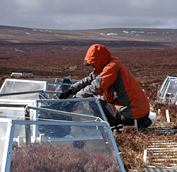 Open-top warming chamber experiment, Moor House uplands monitoring site