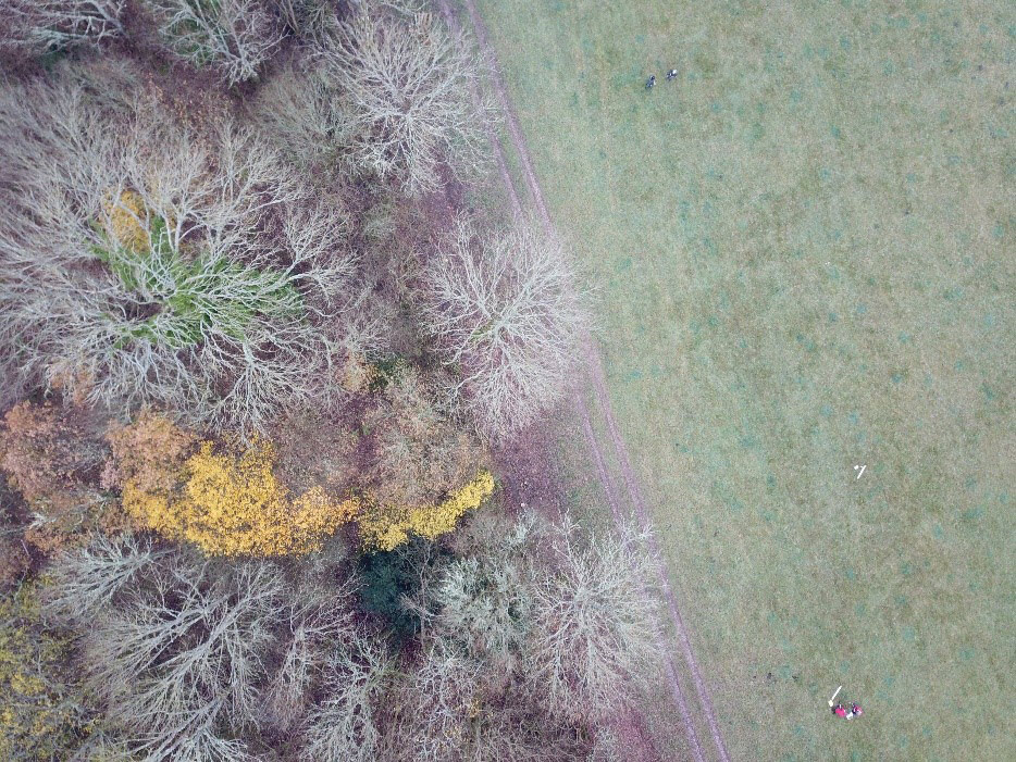 Aerial drone photograph showing divide between woodland and grassland