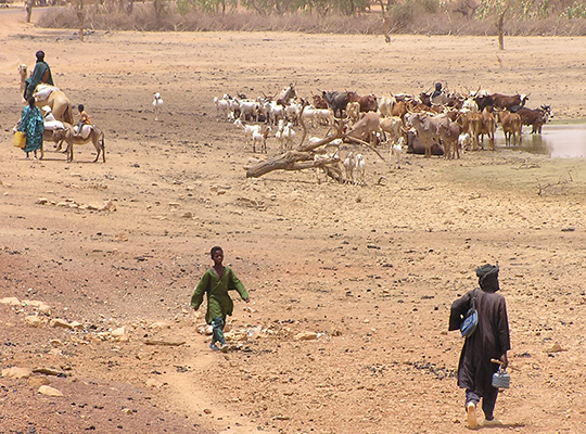 Cattle and people on dry ground