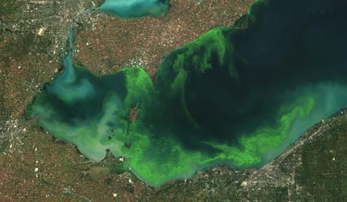 Satellite image of algal bloom in the Western Lake Erie Basin 2011