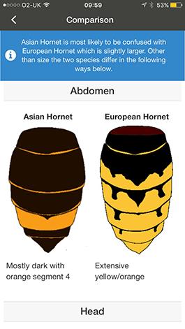 Screenshot from Asian Hornet Watch app