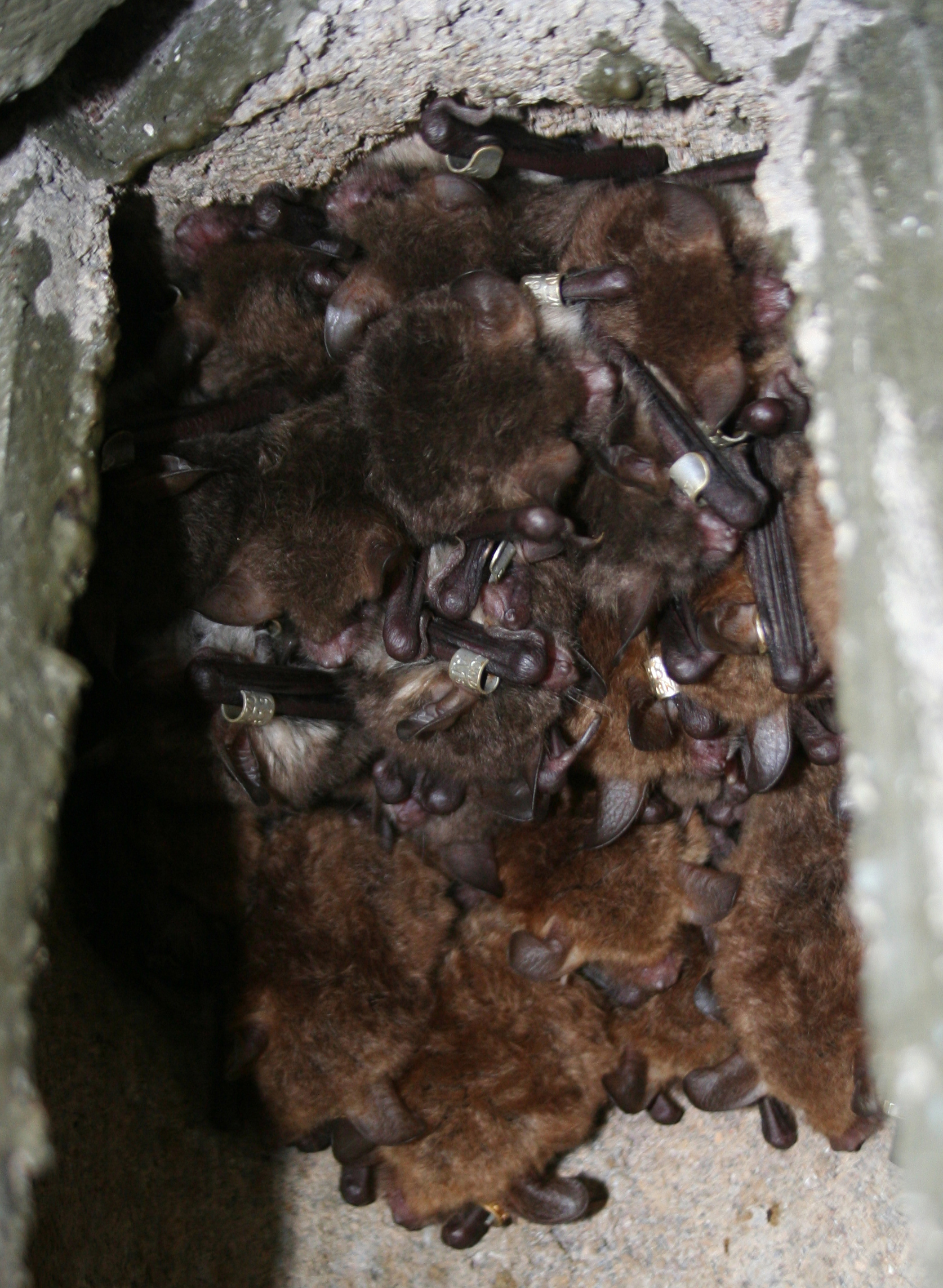 Bats at Wytham Woods, Oxfordshire. Photo: Tom August