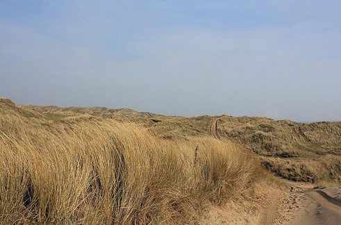 CEH has been involved in ecohydrological investigations at Braunton Burrows in North Devon