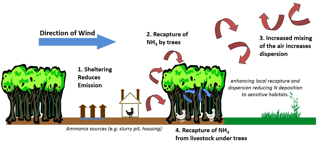 How ammonia pollution can be mitigated by trees