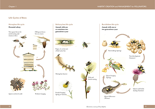 Life cycle of bees page