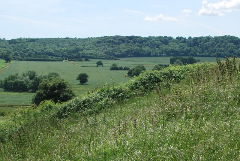 Good butterfly habitat in southern England