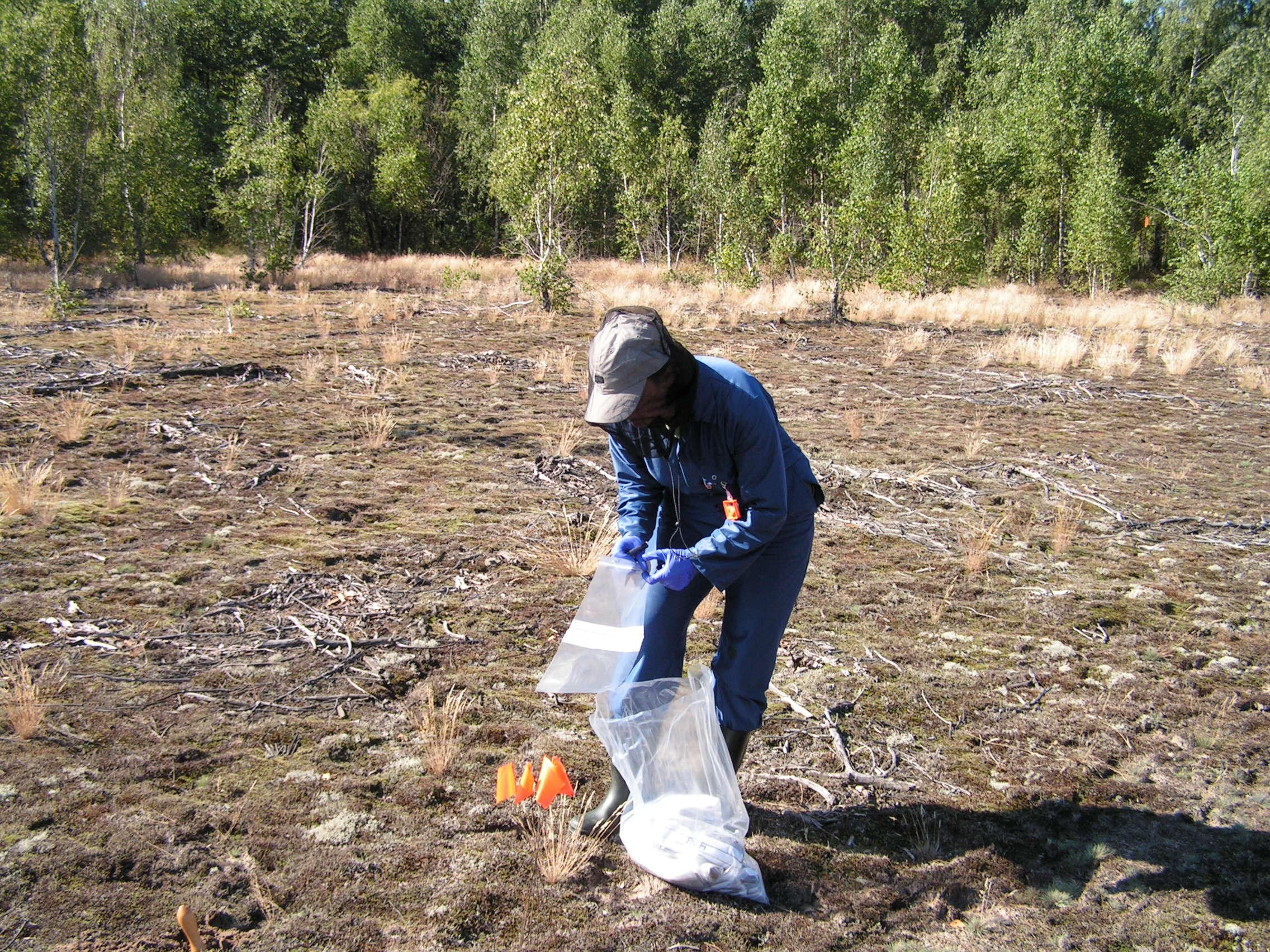 Cath Barnet (CEH Lancaster) sampling in the 'Red Forest' Chernobyl exclusion zone summer 2005