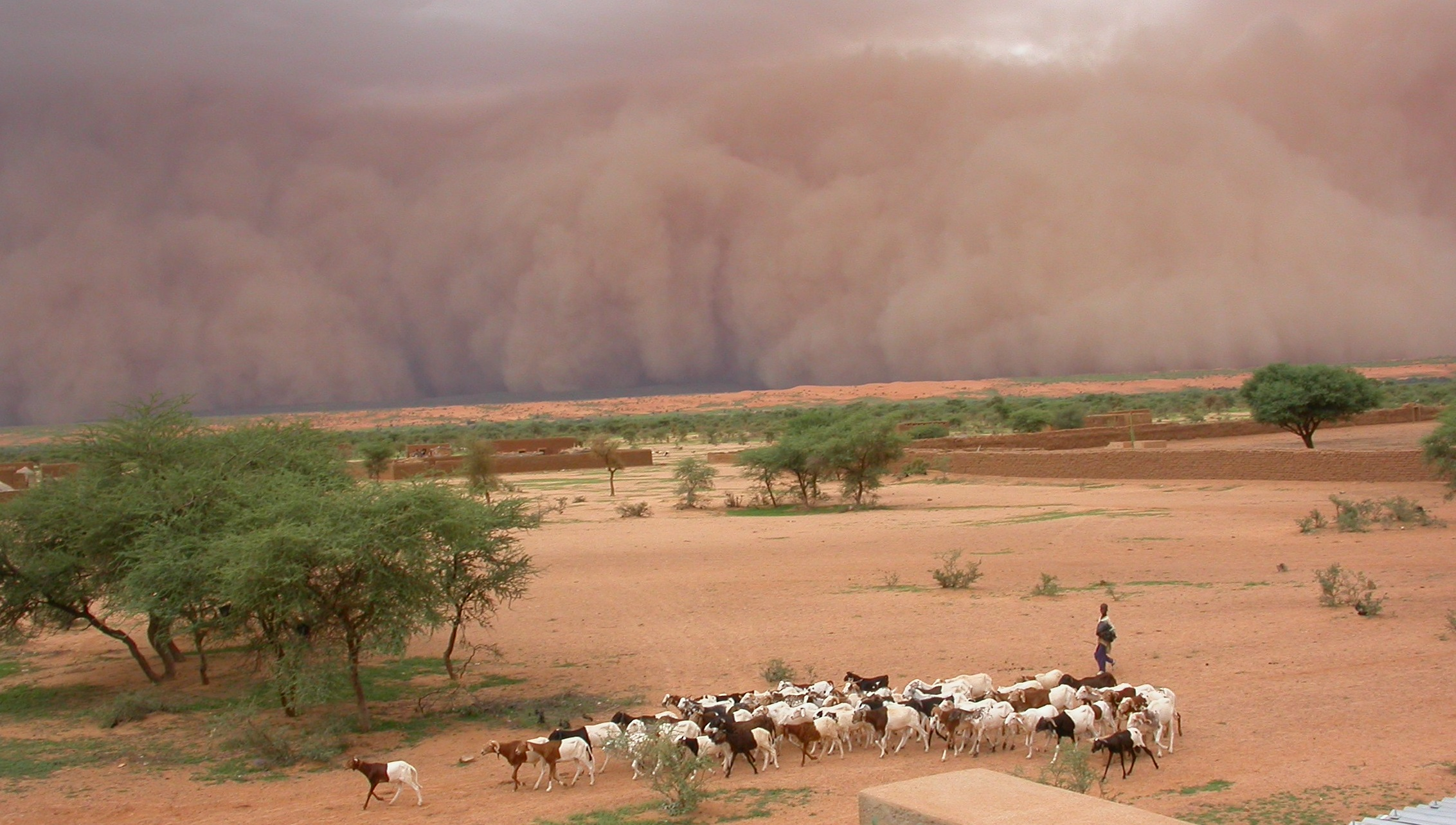 A dust storm in Mali_Photo Françoise Guichard, Laurent Kergoat, CNRS Photo Library.jpg