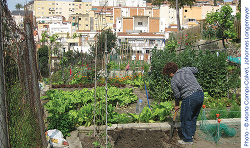 Woman tending an allotment in Barcelona