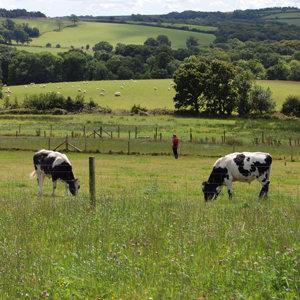 Farmed land (photo by Rothamsted Research)