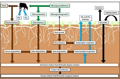Graphic for Livestock grazing and carbon