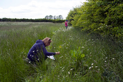 Examining a farmland field margin at Waddesdon Manor during the farm pollinator survey held during Open Farm Sunday. Photo: Heather Lowther