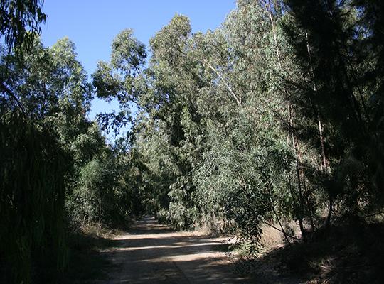 Akrotiri forest, Cyprus