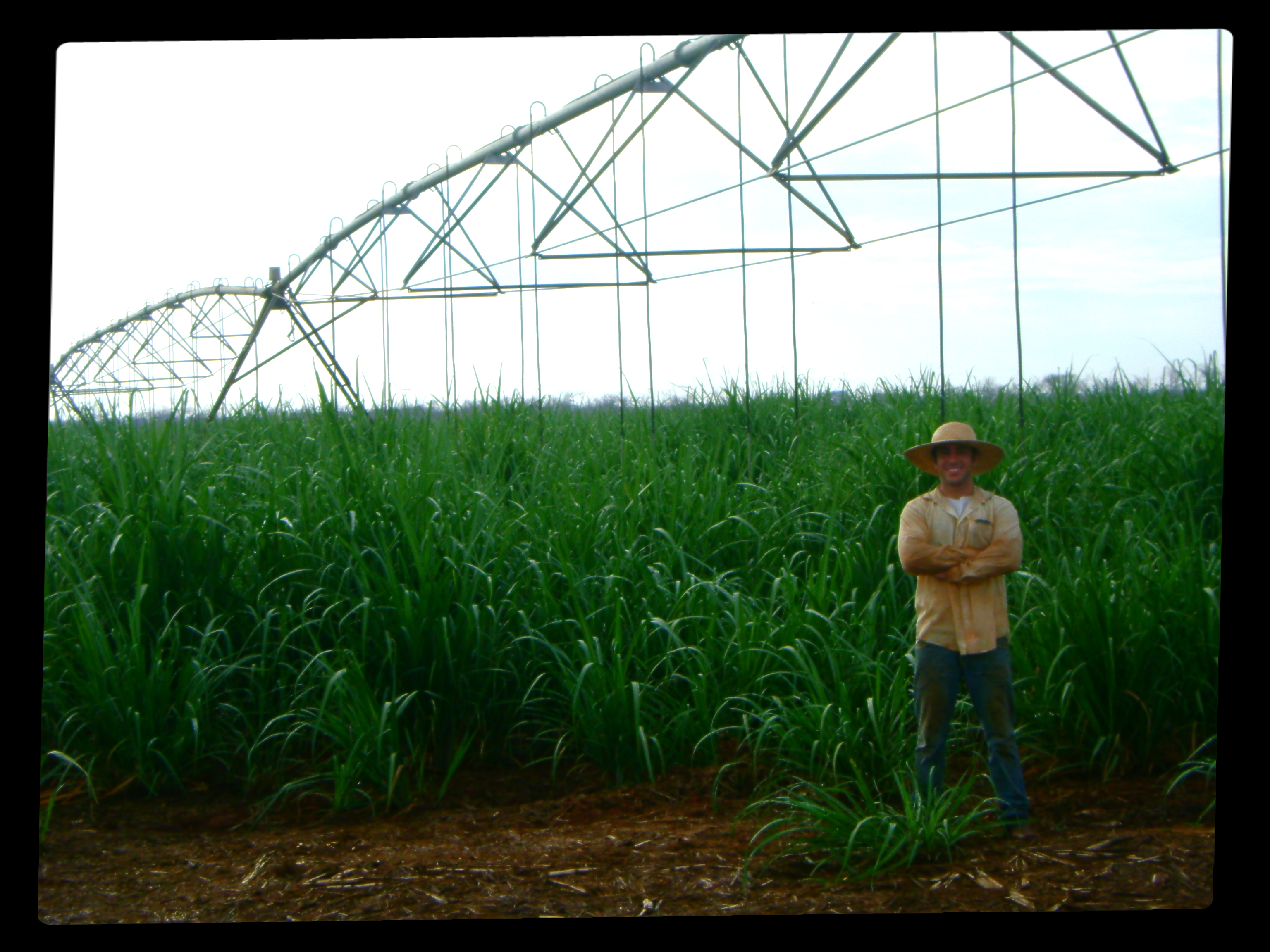 Irrigated sugarcane management (Jaíba - MG city)