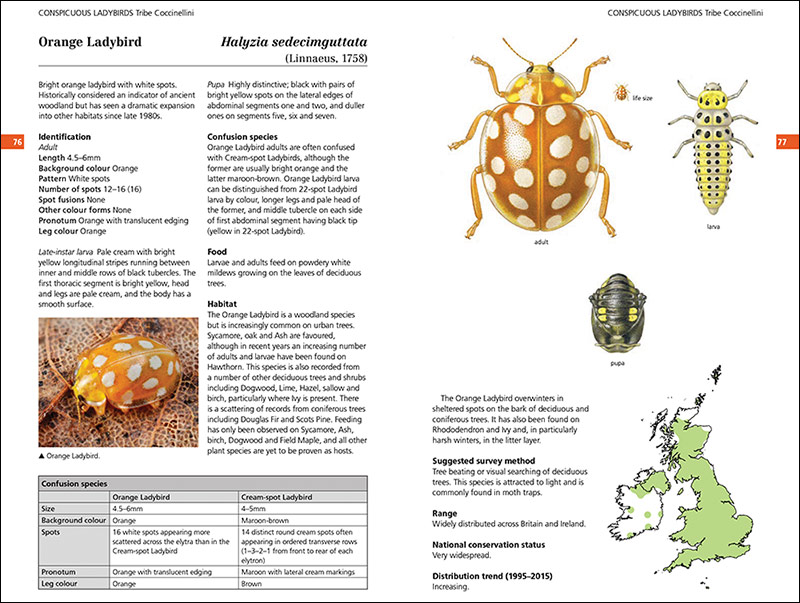 Page spread from Field Guide to the Ladybirds of Great Britain and Ireland