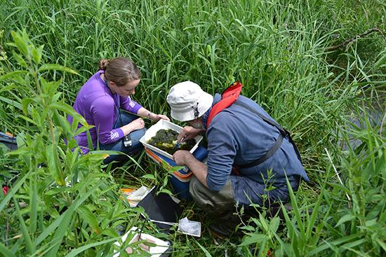 Scientists surveying freshwater invertebrates