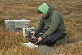 Field work at Moor House uplands monitoring site