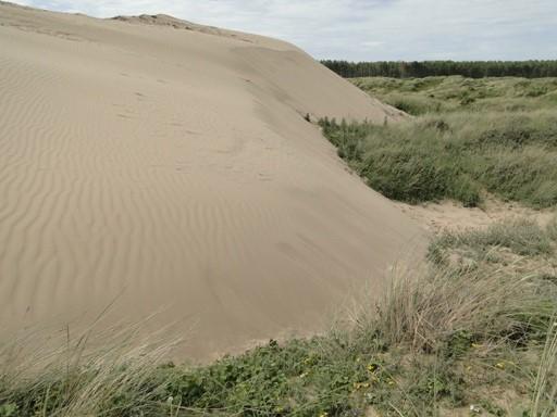 Moving sand at Newborough Warren