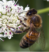 Bee Photo: Heather Lowther