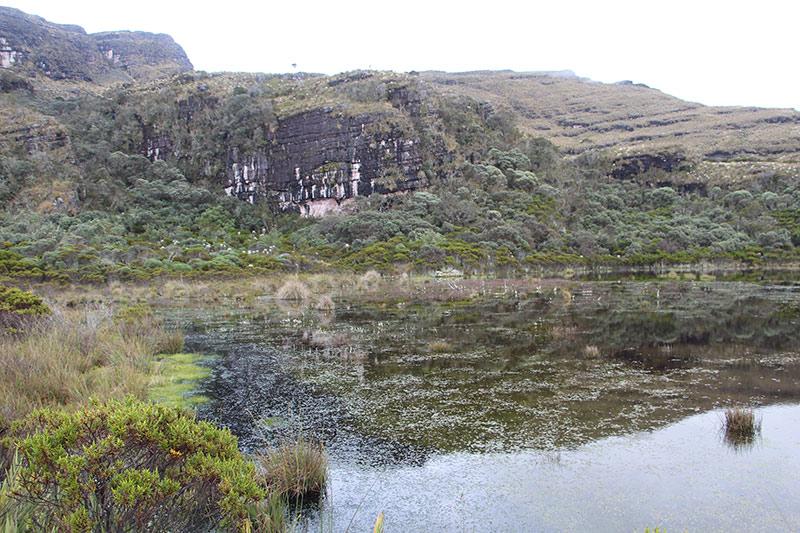 Grassland-peatland landscape in a Colombian paramo