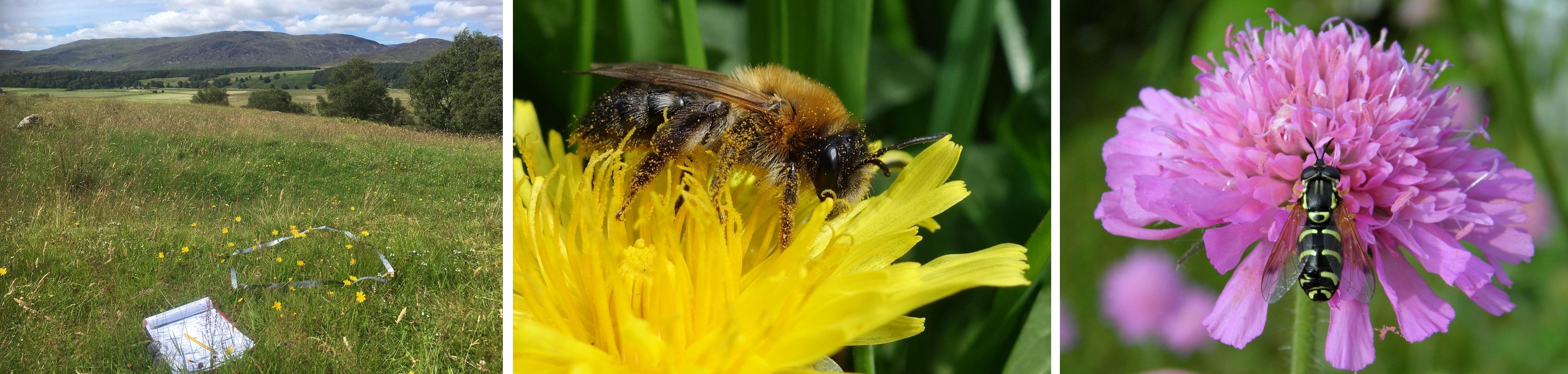 Pollinator images