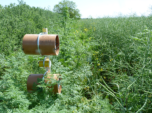 Pollinator trap nest system in a field