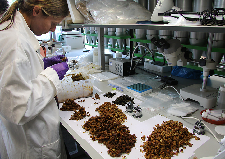 Scientist processing bees and hives in a laboratory