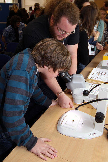 Investigating a ladybird photo: Heather Lowther/CEH