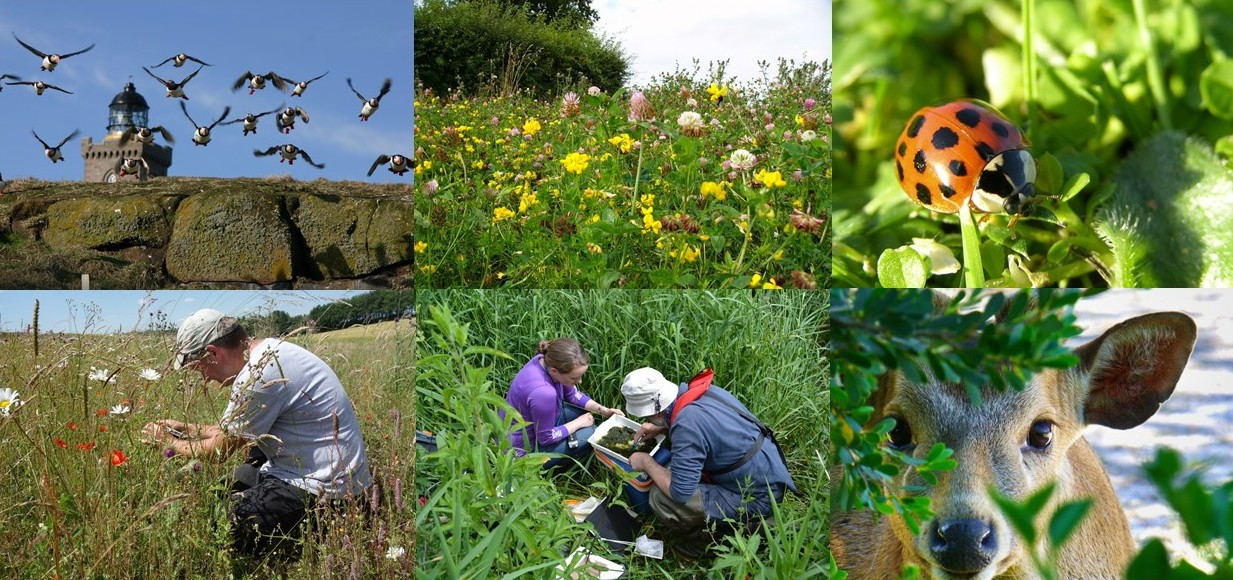 Fieldwork and monitoring - CEH science for State of Nature