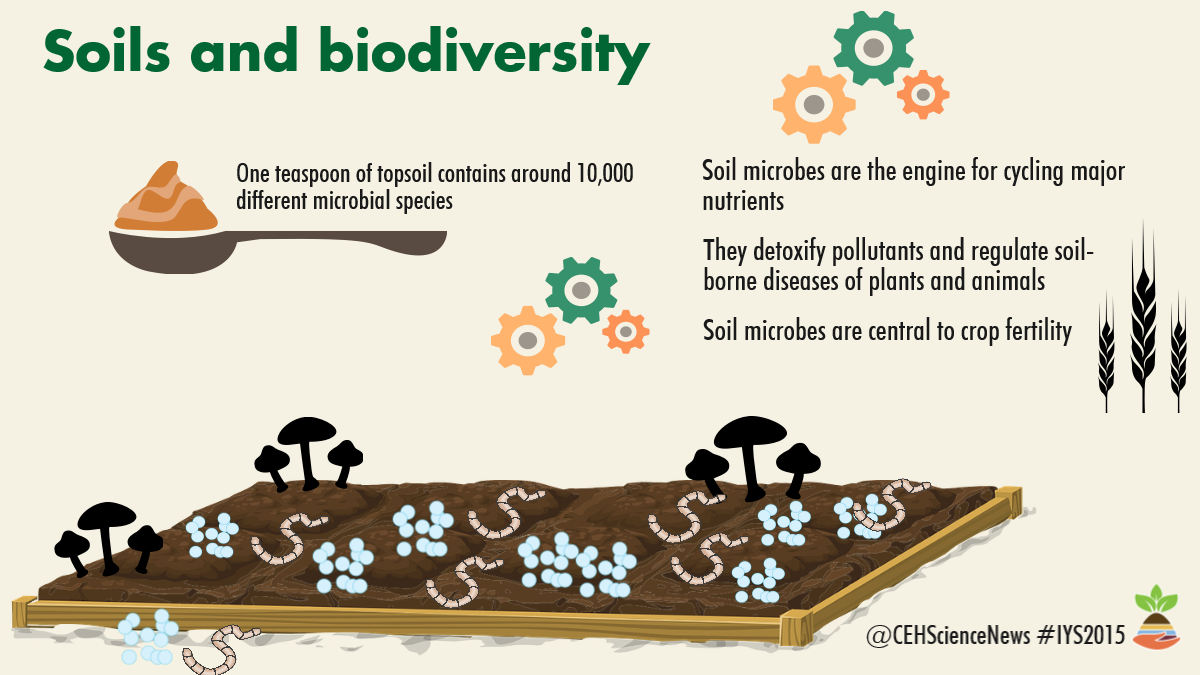 Infographic about soils and biodiversity, produced by CEH for International Year of Soils