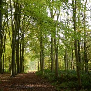 Woodland (photo by Denise Pallett, CEH)