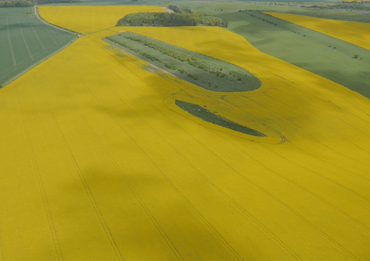 Aerial view of one UK trial plot in CEH's neonicotinoids field trial study