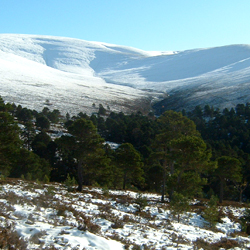 View of View of Allt Ruadh in winter. Invereshie and Inshriach NNR. Photo: Peter Duncan (SNH)