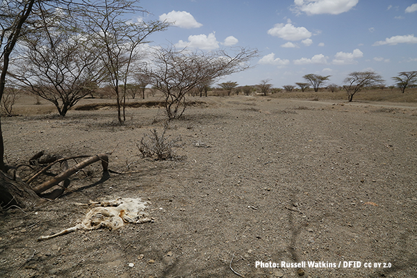 Animal remains on a dry river bed in Kenya