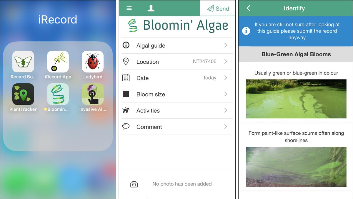 Bloomin' Algae app