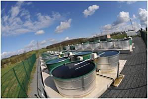 CEH's Aquatic mesocosm facility