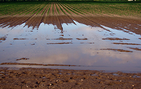 Flooded arable field