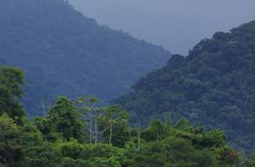 The Atlantic forest of Brazil © John Willsher