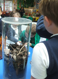 Pupils inspecting a decomposer community mesocosm, and realising how awesome woodlice are!