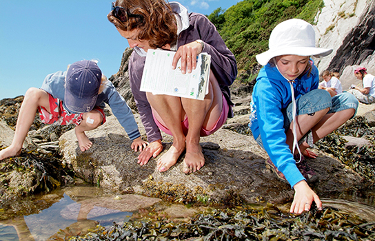 Children and a woman looking at seaweed in a rock pool