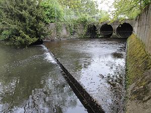 Urban river near Bracknell town centre