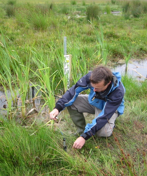 CEH scientists are working on wetlands across the UK