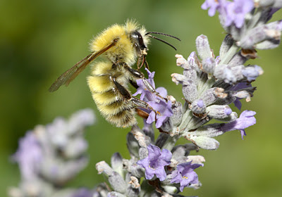 Pressures on pollinators are a global concern