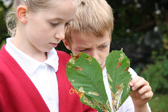 Children examining a conker tree leaf