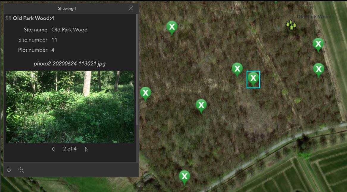 Survey progress and woodland photographs on the digital dashboard