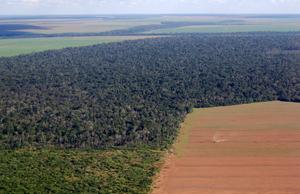 Deforested land