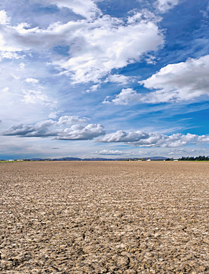 Field during a drought Photo: Shutterstock