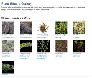 Plant effects gallery screenshot