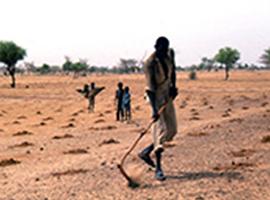 Man tilling dry soil